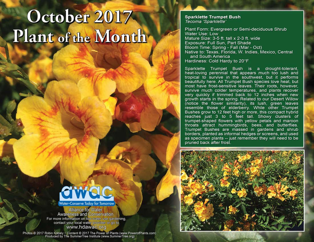 Oct_Plant of Month
