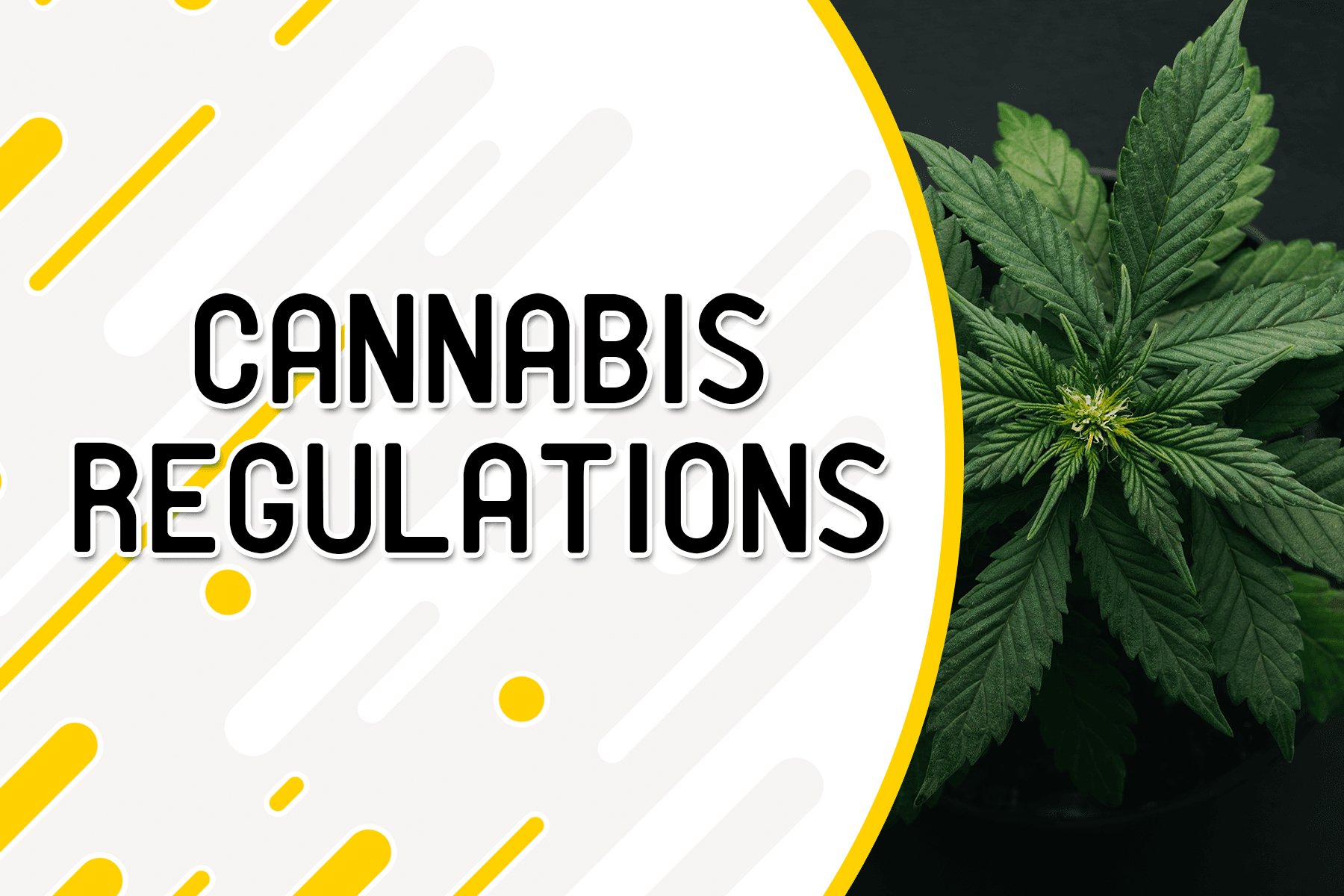 Cannabis-Regulations-Website-Header